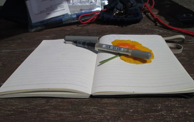 Miriam Halahmy - notebook with poppy on Hayling Island